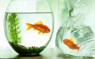 Рыбки которые живут без кислорода