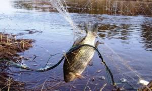 Браконьерские снасти для ловли рыбы