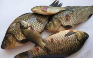 Краснуха у рыбы опасна для человека