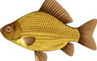 Что приготовить из мелкой речной рыбы