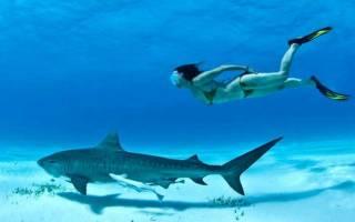 С какой скоростью плавает акула