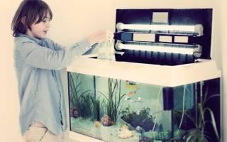 Как обустроить аквариум для рыбок