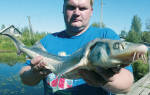 Рыбалка на чудском озере