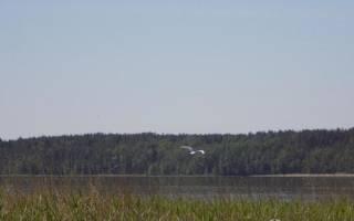 Нахимовское озеро рыбалка