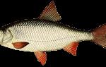 Рыбалка в апреле на малых реках
