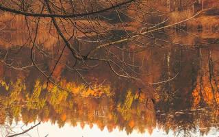 Ловля щуки осенью на спиннинг как правильно делать проводку