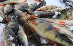 Рыбалка в хакасии