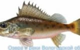 Рыбалка на кубенском озере