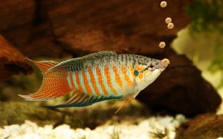Корм для аквариумных рыбок своими руками