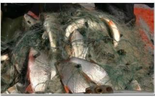 Рыбалка весной сетями