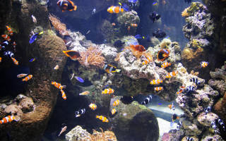 Какие рыбки могут жить без фильтра