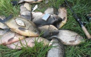 Ловля карася в сентябре на поплавочную удочку прикорм и насадки