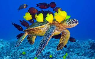 Можно ли черепашке жить с рыбками в одном аквариуме