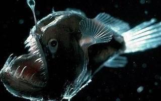 Самые глубоководные рыбы