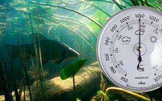 При каком давлении клюет рыба осенью