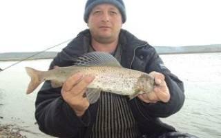 Рыбалка зимой на енисее