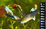 Какая температура должна быть в аквариуме для рыбок