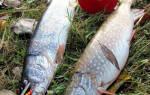 Рыбалка на кружки осенью