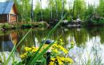 Как построить пруд для разведения рыбы