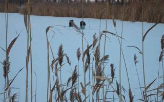 Места для зимней рыбалки