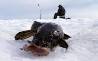 Ловля налима в январе