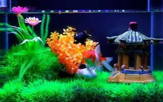Маленький аквариум с одной рыбкой