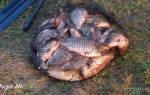 Рыбалка на озере ик