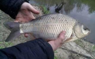 Рыбалка в марий эл клевые места