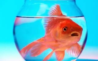Как перевозить аквариумных рыбок
