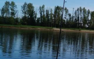 Спиннинг для донной ловли