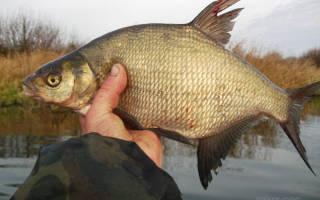 Осенняя рыбалка на хищника