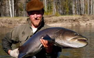 Самая большая пресноводная рыба в мире