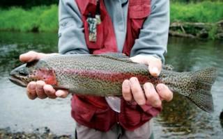 Рыбалка на реке зея