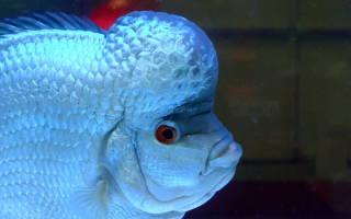 Аквариумные рыбки экзотические