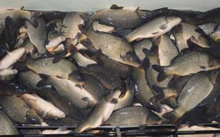 Озеро сенеж рыбалка
