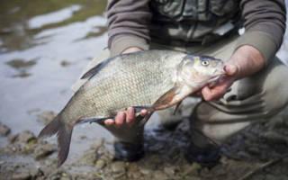 Рыбалка в начале июня