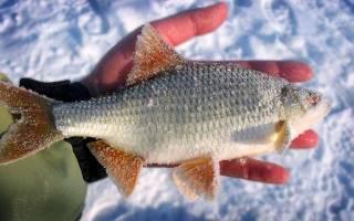Кормушка для зимней рыбалки на течении