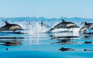 Где живут дельфины
