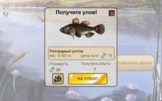 Что на что клюет в рыбном месте