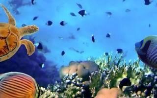 Температура в аквариуме для сомиков