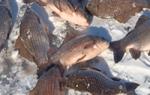Рыбалка зимняя на карася