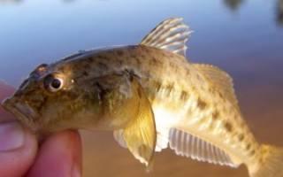 Рыбалка на пескаря