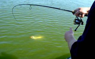 Рыбалка на куршском заливе