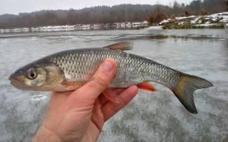 Ловля голавля зимой