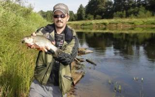 Река молога рыбалка