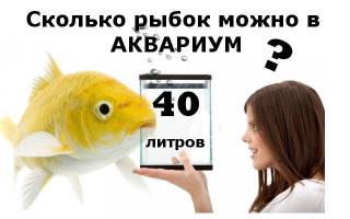 Рыбки для аквариума 40 литров