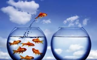 Почему выпрыгивают рыбки из аквариума