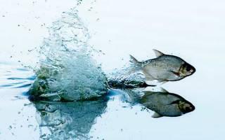 Правила рыбалки в нерестовый период
